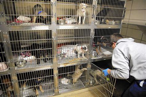 pet shops with puppies city pet shops won t be able to use large scale breeders tribunedigital chicagotribune