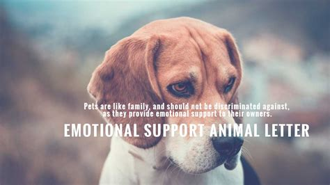 emotional support animal companions