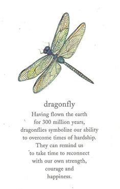 dragonfly rubber st 1000 images about dragenfly s info ect on