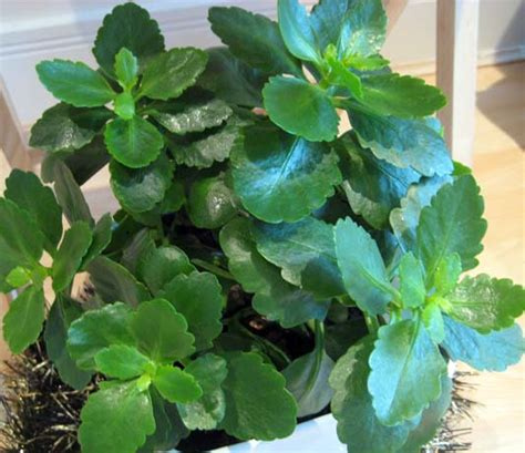 foliage house plant identification house plant identification leaves myideasbedroom