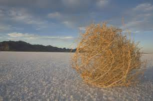 Tumbleweed Deserted Capitol Has Tourists Looking For Tumbleweeds