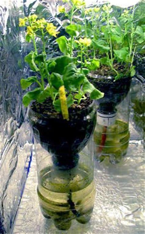 recycle bottle hydroponic gardening hydroponics bottle