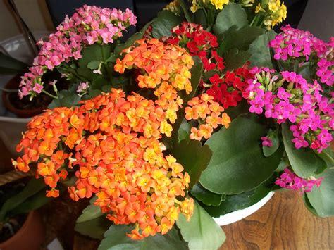plantes grasses fleuries interieur photo de fleur une