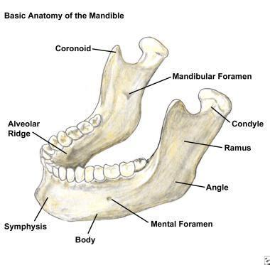 mandible diagram mandibular fracture imaging overview radiography