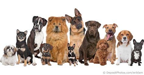 different puppy breeds breeds