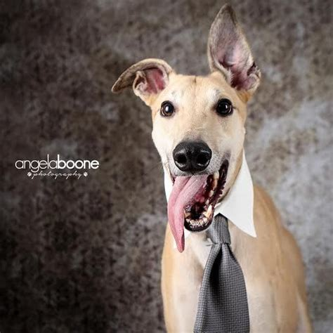 adoption mn 17 best images about 50 shades of greyhound on adoption 50 shades and plays