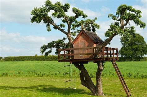Building A Tree House Everything You Need To Know | building a tree house everything you need to know