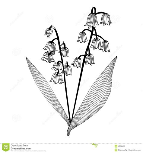 lily of the valley stock illustration illustration of