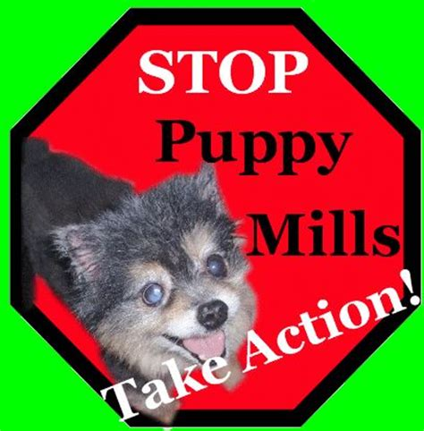 stop puppy mills 161 best images about on ricky gervais conservation and search