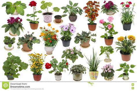 fiori appartamento piante da appartamento e fiori dell interno messi