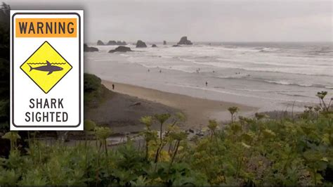 shark sightings by cannon beach you ll see them near