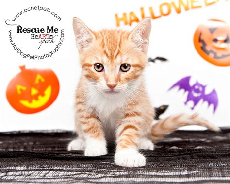 free puppies ta fl cat spooktakular adoptable cats in orlando florida 187 pet photography
