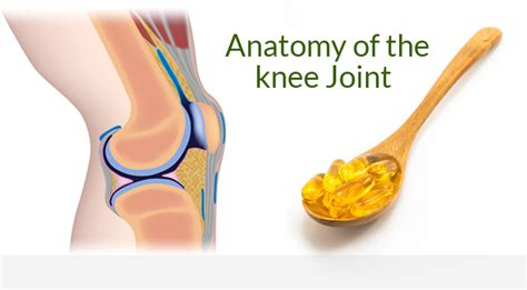 supplement for joint best knee joint supplement