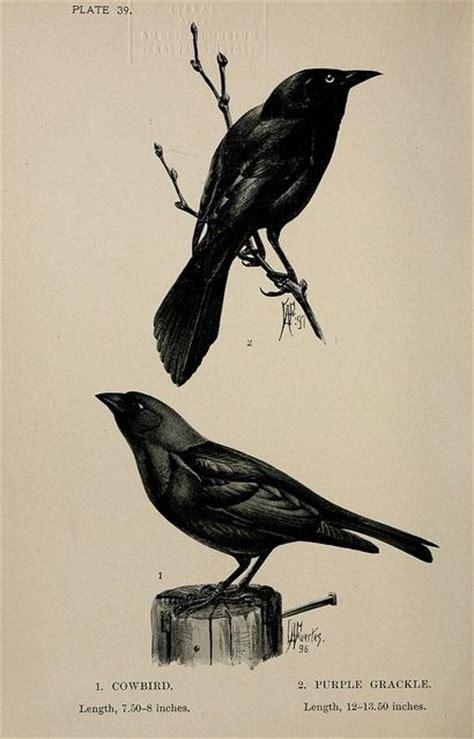 Ac 6275 Black 17 best images about prints illustrations on
