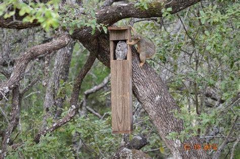 screech owl house plans swallow bird house plans swallow bird house plans