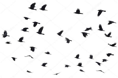 imagenes negras sin fondo conjunto de siluetas negras de aves volando en el cielo