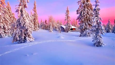 imagenes hd nieve bosque arboles con nieve casa camino fondos de pantalla