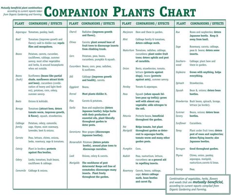 Companion Plants Chart What To Plant Together Gardens Vegetable Garden Companion Planting Guide