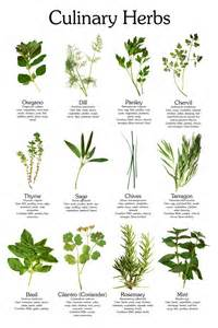 What Are Botanicals Herbs Penn Lawn And Garden