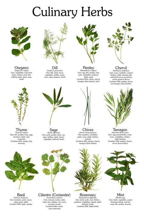 kitchen herbs herbs penn hills lawn and garden