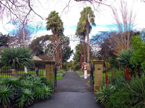 geelong botanic gardens panoramio photo of geelong botanic gardens geelong vic