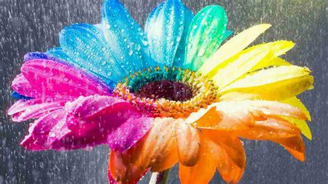 colorful rain wallpaper flower wallpapers colorful rain hd desktop wallpapers