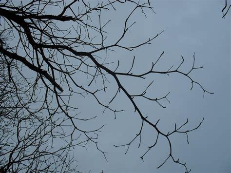 Twig Putih gambar pemandangan cabang musim dingin burung hitam