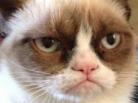 JimmyFungus.com: The Best of Grumpy Cat: The Best Grumpy Cat Memes and Gifs You Will Ever Come