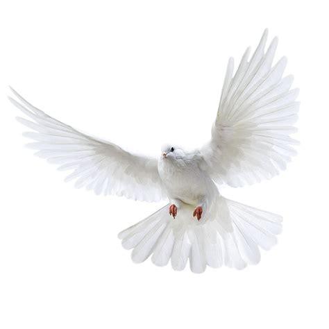 imagenes palomas blancas volando imagen png paloma blanca volando imagenes png