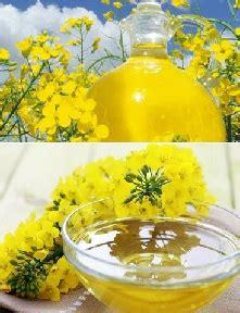 Minyak Canola kesehatan minyak canola