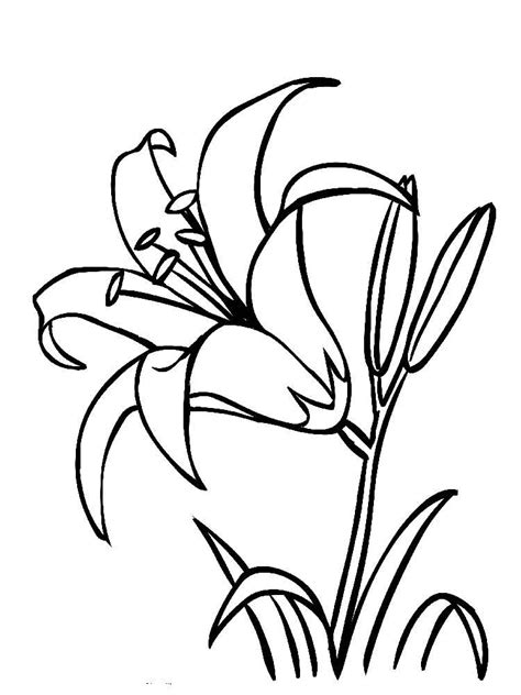Coloring Pictures Of Lily Flowers | lily flower coloring pages download and print lily flower