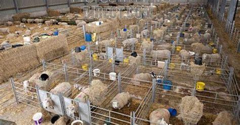 bad  year       lambing shed barns pinterest