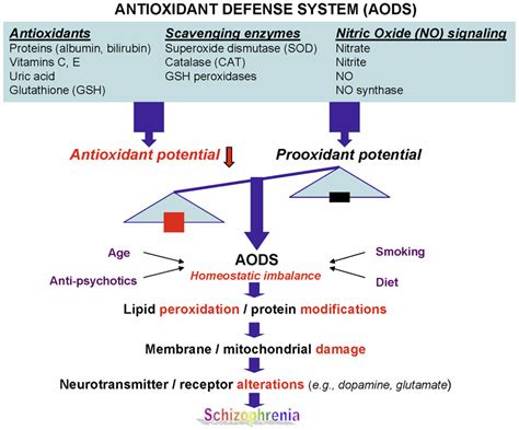 Cellar Antioxidant Defense And Detoxication System In The by Frontiers Associations Between Purine Metabolites And