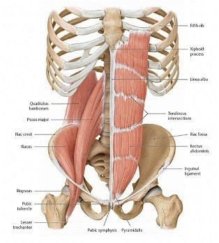 1000 images about healthy on lumbar exercises and hip flexors