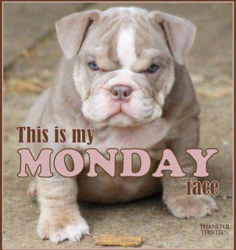 imagenes feliz lunes para compartir hermosas im 225 genes de animales con frases de feliz lunes
