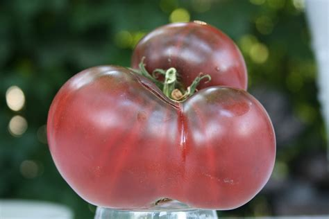 Tomato Purple Seeds sale purple heirloom beefsteak slicer tomato