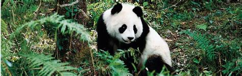 vlies decke panda reise klimaanlage decke korallen vlies