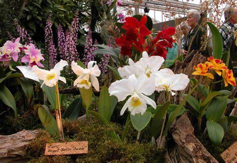 Botanischer Garten Berlin Pflanzen Kaufen by Rarit 228 Ten F 252 Nf Kontineten Orchideenausstellung Im