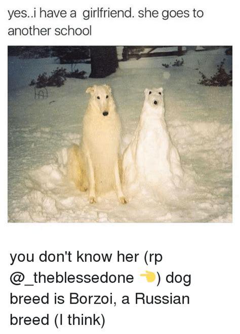 T Dog Meme - 25 best memes about borzoi borzoi memes