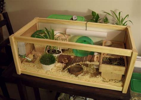 hamster aquarium setup http evobig 2012 08