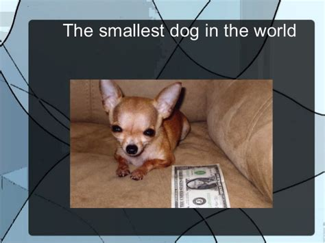 the tiniest puppy in the world the smallest in the world