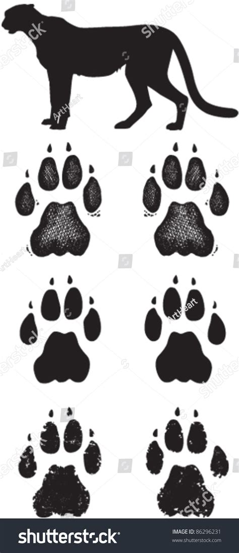 cheetah paw prints tracks three vector stock vector
