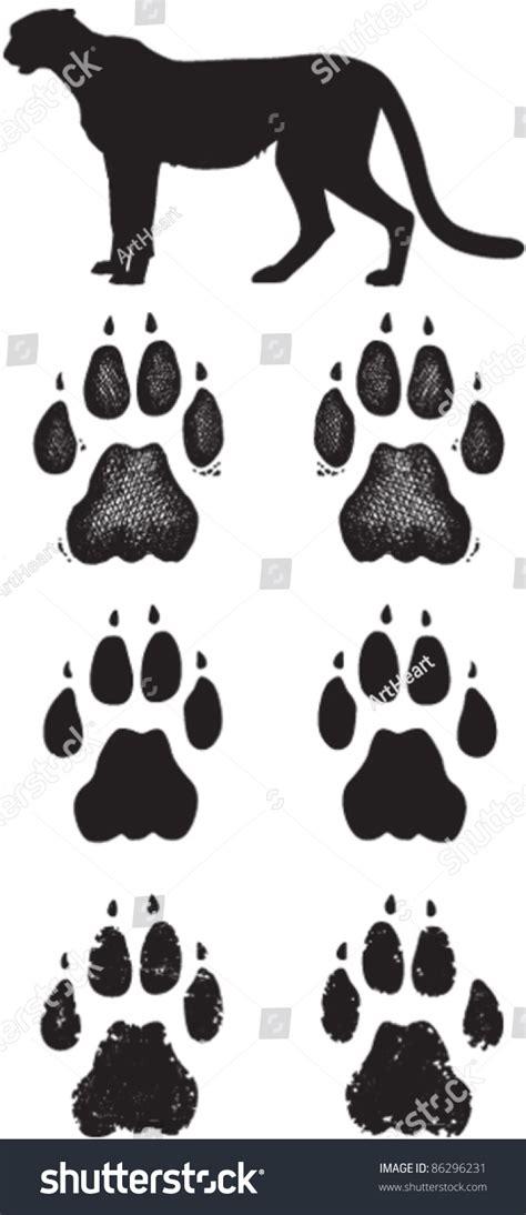 cheetah paw prints tracks three vector stock vector