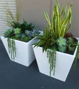 Large Succulent Planter by Mixed Succulents In Large Fiberglass Planters Make Be Leaves