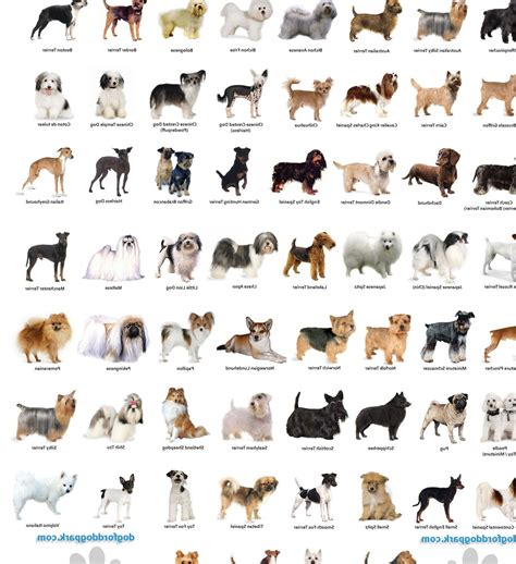 dogs and breeds small breeds breeds in alphabetical order names of breeds breeds picture