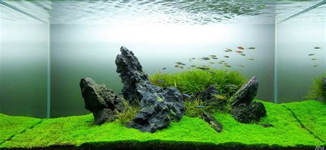 Aquascaping Techniques The Art Of Nature Aquariums Miyabi Aqua Design