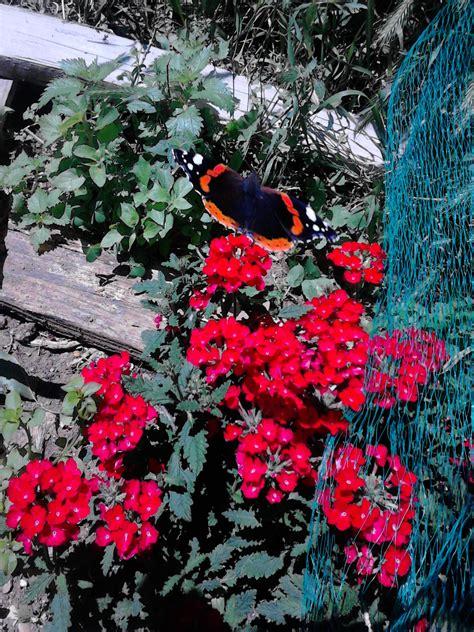 giardino farfalle giardino per le farfalle centro di educazione ambientale