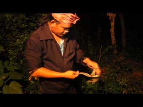 Pandan Merah Kujang penarikan pusaka doovi