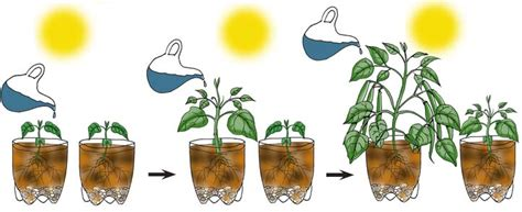 design an experiment using a seedling and a block of agar experiment design independent dependent and controlled