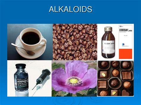 alkaloid  asam glutamat